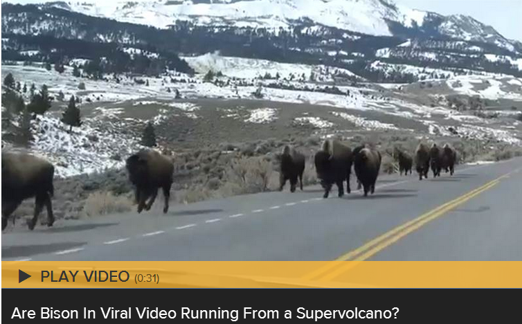 Bison Running Supervolcano