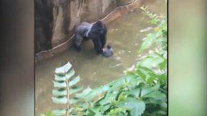 harambe-Gorilla