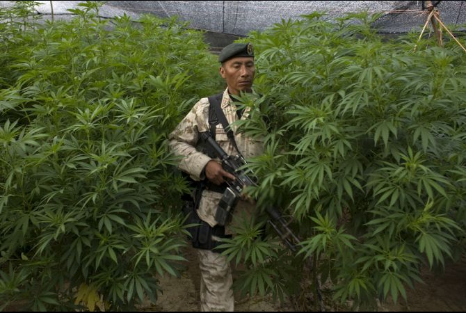 mexico and marijuana
